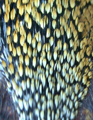Intelligible answer fly tying jungle cock feathers discuss